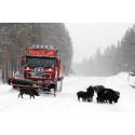 Förnyat kontrakt för snöröjning i norr