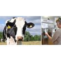 Drive-in-mjölk och kosläpp gör bönder till årets företag