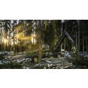 Hållbart skogsbruk