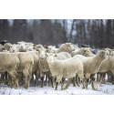 Fjällräven lancerer uld-projekt
