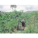 En miljon träd planteras och bevaras av Avisera