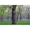 Træer og skove kan gøre den sorte landbrugspakke grønnere