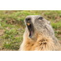 EXPERT COMMENT: Groundhog Day: the truth about these furry forecasters