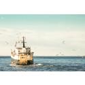 """HaV föreslår nytt fördelningssystem: """"Är mer flexibelt för fiskaren"""""""