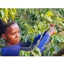 Peter Larsen Kaffe skaber bedre vilkår for 40.000 farmere