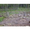Hänsyn till forn- och kulturlämningar i skogen