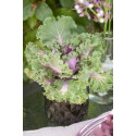 Fyll ljuslyktorna med höstens växter - säsongsinspiration oktober