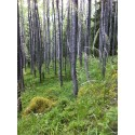 Utvidgning av Gåsbergets naturreservat i Rättvik skapar fristad för hotade arter