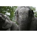Levande elefanter i Slottsskogen!