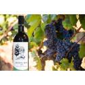 Högberga Vinfabrik lanserar egentillverkat naturvin