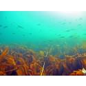 Hausting, havbruk, berekraft og reiseliv – den blå næringa skal vekse på Sørlandet