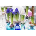 Hyacinter - med en doft av jul