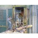 55 000 namnunderskrifter mot djurförsök på apor