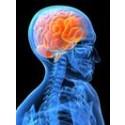 Snabb stressreducering med mindfulness – nu på webben