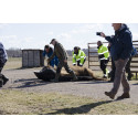 Nio visenter från Avesta ska leva fritt i Rumänien