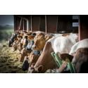 Arla Landwirte entscheiden sich für vollständige Umstellung auf GVO-freie Fütterung