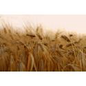 Altian luomuviljaviinan tuotanto saa jatkoa