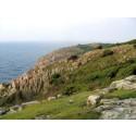 Kullaberg första naturområdet i Sverige att certifieras som hållbar turistdestination