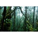 Tropiske skove genopretter sig selv mere effektivt uden hjælp fra mennesker