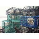 2019 års fiskekvoter klara: Ökning för havskräfta, minskning för torsk och nya regler för ålfiske