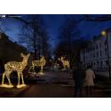Vinterstad i ljus  – Vasavägen/Foto: MK Illumination