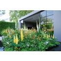 Haveselskabet: Her er de vigtigste tendenser fra Chelsea Flower Show