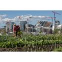 """Norwegens Hauptstadt Oslo ist Europas """"Green Capital 2019"""""""