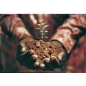 Scrive firar 10 miljoner e-signerade digitala dokument med att plantera 500 träd