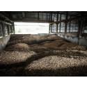 Fjernvarmeselskaberne er foran aftale om certificeret bæredygtig biomasse