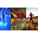 Typ 2-diabetes kan bli normalltillståndet om vi fortsätter leva som vi gör!