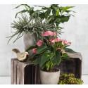 Topplista - gröna växter