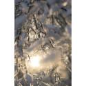 Talvipäivänseisaus ja vuoden pimein aika on käsillä: tässä vinkit komeisiin kuviin Sonyn uudella SEL100F28GM-objektiivilla
