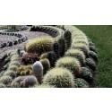 Pressinbjudan: Invigning av kaktusplanteringen 2016