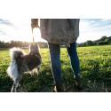 Hundägare riskerar stora skadestånd