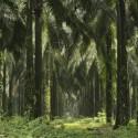 L'Oréal tager bæredygtig og ansvarlig brug af palmeolie et skridt videre