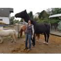 Chance: Hilfe bei Pferdekrankheit Druse jetzt ohne Medikamente