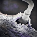 What happens in the semen between ejaculation and fertilization?
