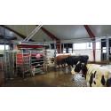 Pressinbjudan: Nu invigs Göteborgs första mjölkgård med robotmjölkning