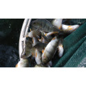 Sustainable Aquaculture at local and global scales
