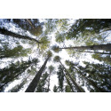 Ackrediteringsinbjudan: Sveriges trä- och skogsindustiris framtid i Sverige