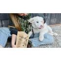 Proferm® Pets nytt glutenfritt fodertillskott för husdjur
