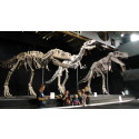 Dinosaurierna väcks till liv i Kalmar igen – nu större och farligare än någonsin