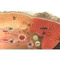 AbbVie får positivt utlåtande från CHMP för risankizumab (SKYRIZI™) för behandling av måttlig till svår plackpsoriasis