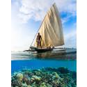 Segla i Indiska Oceanen