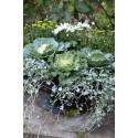 Recept på en lyckad plantering i augusti-september