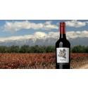 Nytänkande vin från Argentina: Imago!