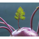 Framtidens Mat & Dryck - En utställning om visioner, hälsotrender och klimatmat.