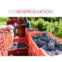 UTG Reseproduktion släpper en unik mat- och vinresa till Piemonte med Björnstierne Antonson