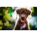 Xgroup skapar en bättre vardag för din hund genom digitalisering via dotterbolaget Xsolutions