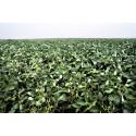 100 procent ansvarsfull soja skyddar värdefull natur